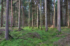 woodland (mak_9000) Tags: