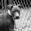 Deuce14Oct20174-Edit.jpg (fredstrobel) Tags: dogs pawsatanta phototype atlanta blackandwhite usa animals ga pets places pawsdogs