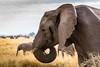 Inner Peace (Beppe Rijs) Tags: africa afrika elefant herde portrait porträt serengeti tansania tanzania elephant herd