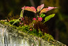 Miniature Garden (vernonbone) Tags: 105mm 1855kitlens 2017 autumnoctober d3200 eastpoint eastpointpark lens ontario closeup colors flowers macro marco105mm nikon outside plants sigma