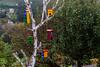 CAMINO DEL NORTE. CASITAS DE COLORES (bacasr) Tags: viajando caminando asturias casitasdepájaros caminodelnorte travelling backpacking spain littlehouses countryside principadodeasturias árbol rural birdhouses casitas españa caminodesantiago thewayofsaintjames