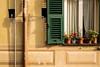 Plumbing pipes, Shutters & Flowers in Camogli (spaetzle) Tags: camogli italy shutters flowers shadows italianriviera fujifilmxt1