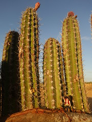 """ Hola gringo ! "" - Punta Gallinas (Play(boy)mobil) Tags: playmobil colombie colombia gallinas punta cactus"