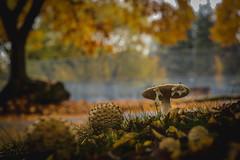Mushroom (Photo Alan) Tags: mushroom autumn street streetphotography nature vancouver city cityscape landscape closeup canada