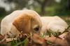 Crestfallen (Mariano Colombotto) Tags: puppy dog cute beauty perro nikon portrait animal mammal tucuman argentina pet