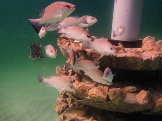 Navarre Marine Sanctuary Fish Magnet
