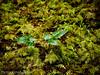 NEW GROWTH (PHOTOGRAPHY|bydamanti) Tags: olga washington unitedstates us orcasisland moranstatepark leaves