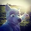 #fursuitfriday #sunny #iwantsummer #fb #furry (Keenora Fluffball) Tags: keenora fursuit furry kee