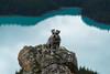 Lofty Perch (Following Keaton) Tags: peytolake dog lake landscape mountains nature schnauzer wilderness