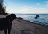 Cortana at Lake of the Woods (Tony Webster) Tags: cortana lakeofthewoods minnesota zippelbay dog forest williams unitedstates us
