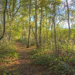 Autumn Trail thumbnail