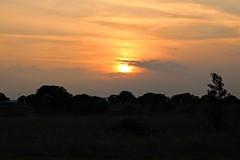 Sunset Countryside (Francesco Spadafina) Tags: sunset tramonto puglia campagna countryside silhouette trees sky cloud apulia