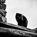 Black Cat One Animal Low Angle View Domestic Cat Black And White Photography Blackandwhite Photography Black And White Collection  Nsnfotografie