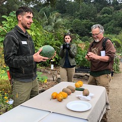 Documenting the Unusual Vegetables (Melinda Stuart) Tags: cucurbits cucumber garden uc botanical horticulture cropsoftheworld people cameras display demonstration vegetables lecture tasting melon colors food cucurbita ucbg staff botany classification