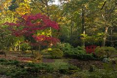 Japanse tuin - Clingendael (mariandeneijs) Tags: clingendael landgoedclingendael bos park tuin japanesegarden japansetuin