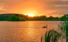 Autumn Equinox Sunset at Pitfour Lake Mintlaw Aberdeenshire (ChicqueeCat) Tags: autumn equinox aberdeenshire lake pitfour swan silhouette sunset nikon d3300 landscape water