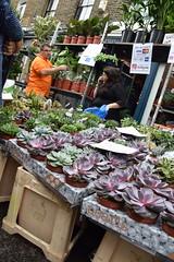 DSC_7541 London Columbia Road Sunday Flower Market (photographer695) Tags: london columbia road sunday flower market