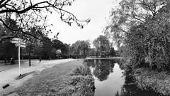 Procurando reflexos no Vondelpark (André Felipe Carvalho) Tags: vondelpark holanda amsterdam preto branco pretoebranco blackwhite
