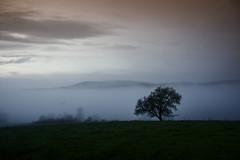 Morgennebel (uschmidt2283) Tags: a7r christes geba landschaften samyang thüringen blauestd