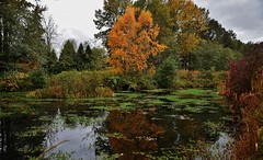 Autumn, 2017 (Custom_Cab) Tags: autumn fall season tree trees leaf leaves grass fence grey sky 2017 field garden water pond reflection forest lake big bend burnaby bc british columbia canada park hamiton fraser foreshore lily pads