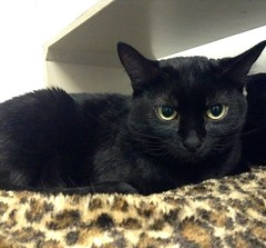 Gracie - 1.5 year old spayed female