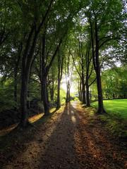 Woodmood (glessew) Tags: bos wald wood foret gelderland eerbeek landgoed huisteeeerbeek