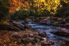 Otoño mágico (cruzjimnezgmez) Tags: canfranc huesca españa bosque hojassecas piedras agua pirineos montañas rio paisaje naturaleza otoño