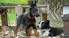 Tough Pups (zola.kovacsh) Tags: outdoor animal pet dog school pup puppy dobermann doberman pinscher border collie