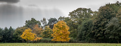 20171015-IMGP0779 (rob mulf) Tags: nymans landscapes pentax westsussex greatbritian england outdoors nature