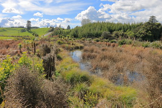 Lake Okaro . Rotorua . NZ. (Explored).