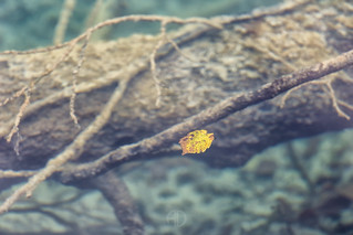 Fall in fall (31379)