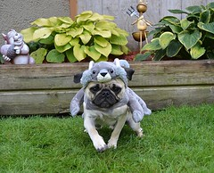 Who Let The Squirrels Out? (DaPuglet) Tags: squirrel squirrels animal animals pet pets dog dogs pug pugs costume halloween gray grey nature garden funny puppy cute sunrays5