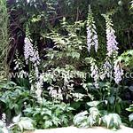 Gardening in Shade thumbnail