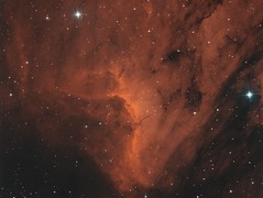 Pelican Nebula (Photonen-Sammler) Tags: ic5070 pelican nebula hydrogen alpha stars astrophotography astronomy narrowband photography