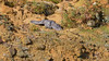 Just catching some rays (KHR Images) Tags: littleowl little owl wild bird birdofprey athenenoctua sunshine sunbathing quarry sandy bedfordshire wildlife nature nikon d500 kevinrobson khrimages