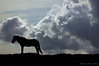 When time stood still. (Lindman Hans) Tags: horse silhouette