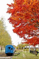 (oht036) Tags: autumn leaves 紅葉 hokkaido train canon 6d