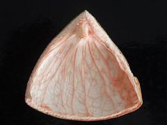Cáscara de toronja / Grapefruit peel (ix 2017) Tags: toronja grapefruit cáscara peel fruit fruta triángulo triangle cuernavaca morelos mexico méxico israfel67 rosa pink anaranjado orange contraste contrast