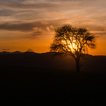 A Tree in the Sunset thumbnail