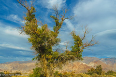 USA, Califonia, Eastern Sierra Mountains (Khun Hans Outdoor Photography) Tags: california usa trees mountains easternsierra sky coppercloudsilvernsun