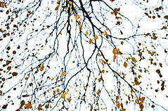 branches and leaves (Stefano Rugolo) Tags: stefanorugolo pentax k5 kepcorautowideanglemc28mm128 branches leaves autumn highkey yellow white black abstract up sweden svezia hälsingland tree sverige
