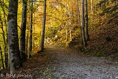 Autumn colors (rjonsen) Tags: switzerland nature path noperson fall trees golden hour tripod giessbach