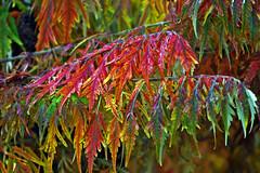 HerbstStillLeben (Michael Döring) Tags: gelsenkirchen bismarck zoomerlebniswelt zoo goldeneroktober herbststillleben afs200500mm56e d7200 michaeladöring