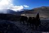 Annapurna trail, Marsyangdi Kola (Oreste Villari) Tags: nepal himalaya alpinismo trekking nikon f3 colours mountain pokhara kathmandu manang kagbeni kali gandaki shiva ganesh himal buddismo buddha yak life fields marsyangdi kola chhongba lama sherpa dumre dal chame pisang braga torong phedi mukthinath jomsom tatopani ghorepani