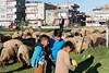 DSC07139.jpg (Reportages ici et ailleurs) Tags: batman nomade tradition sédentaristion koçer mouton bakur yannrenoult turquie kurde hayvan turkey kurdistan