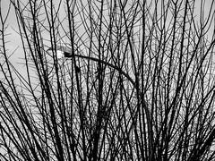 La luz escondida (Micheo) Tags: bnbw bwbn luz crisis problems troubles upset lost perdida ramas branches farola streetlamp desolación tristeza contrastes lineas curva recto