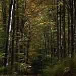 Herbstlicher Taunus thumbnail