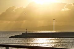 Que nadie nos estropee un buen dia (Micheo) Tags: sunrise amanecer puerto italia crucero hope expectations mar golden dorado gaviota vuelo pajaro bird momento magico magia
