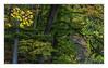 Sometime the autumn begins (bavare51) Tags: herbst bunteblätter wald buchen ahorn mischwald natur landscape