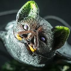 Vampyre Bat - Explored (SKAC32) Tags: vampirebat canonef100mmf28macrousm halloween bat macromondays